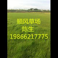 梅州草皮基地