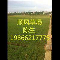 梅州草坪基地