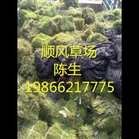 梅州草场种植