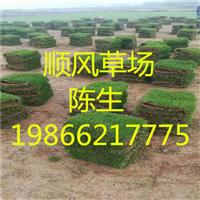 梅州绿化草卷