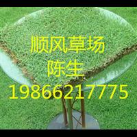梅州顺风草场
