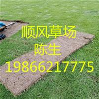 梅州绿化草坪