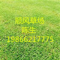 梅州大叶油草