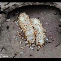 湖州灭蟑螂公司