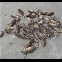 湖州灭白蚁公司