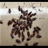 长兴灭蟑螂公司