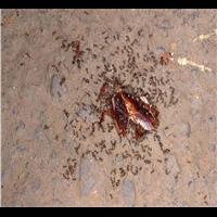 長興殺蟲除蟲公司