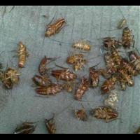 长兴灭白蚁公司