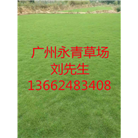 广州绿化草皮