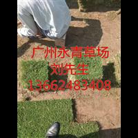 广州马尼拉草