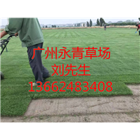 广州绿化草坪