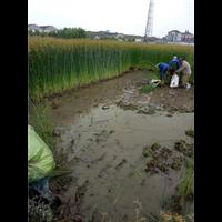 水生植物价格