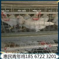 广西罗曼粉青年鸡冬季养殖罗曼粉青年鸡养殖密度