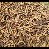 北京回收冬虫夏草
