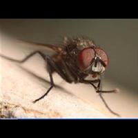福州灭苍蝇