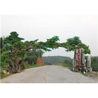 四川园林假山|成都假山制作|重庆假山制作