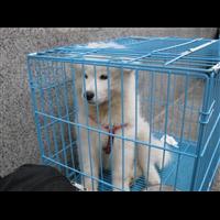 无锡如何托运宠物狗