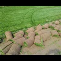 常州草坪批发北方草坪常见病害的原因及防治