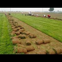 常州草坪基地用草坪草种的选择