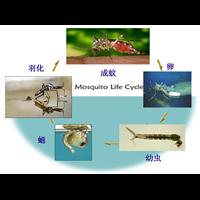 永州除蚂蚁生物防治法