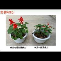 重慶營養土廠家重慶營養土批發價格