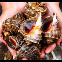 海鲜水产小海螺