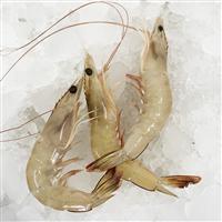 台湾海峡大虾野生基围虾海鲜对虾青虾远洋捕捞码头采购