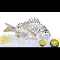 野生黄翅鱼新鲜冷冻海鱼