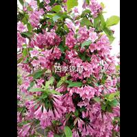 哈尔滨花卉