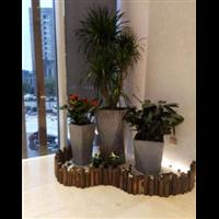 武汉绿色植物出租
