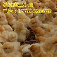湖北正宗土鸡苗批发原生态散养鸡售后保障