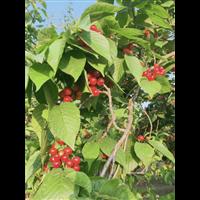 安微砀山水果代办