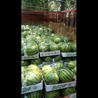 砀山西瓜种植基地