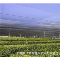 广州蔬菜大棚