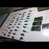 抚州超市灭鼠灭鼠药的放置地点