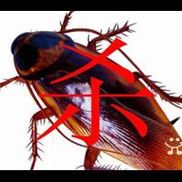 拉萨灭蟑螂的服务范围