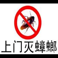 拉萨灭鼠蟑螂如何有效灭蟑螂