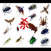 拉萨杀虫公司有害生物危害介绍之蟑螂