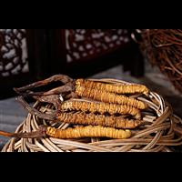 黃埔回收冬蟲夏草一根冬蟲夏草回收多少錢