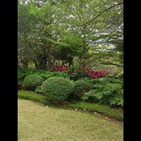 广东园林绿化工程