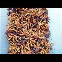 郫县虫草回收
