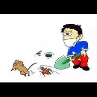 邯郸除虫除蚁灭鼠等蟑螂彻底根除