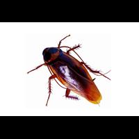 邯郸灭鼠蟑螂蚊蝇白蚁等有害生物