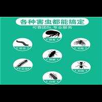 内江杀虫公司蚊蝇对养殖场的危害