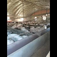 育肥豬養殖2