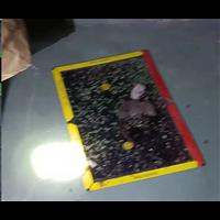 徐州餐馆饭店灭鼠杀虫