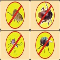 绵阳白蚁防治防止白蚁的几个战略