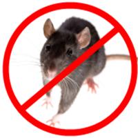 绵阳灭鼠介绍哪些鸟类是白蚁的天敌