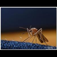 济宁灭蟑螂灭蚊蝇灭蚊快速上门企业