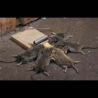汶上县灭鼠宏康企业专业除四害